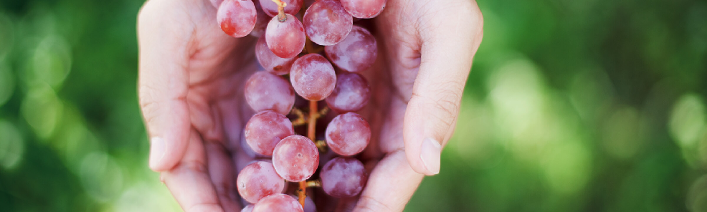 Vine to Wine 自然な味わいのワインを目指して