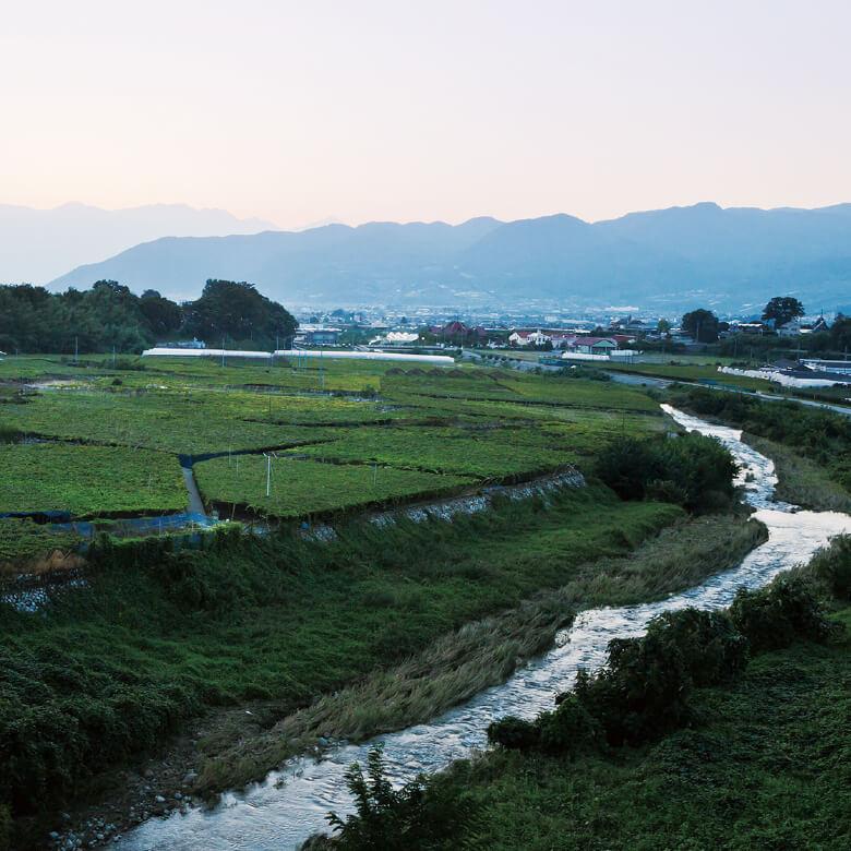 Terroir 日本のワイン発祥の地、勝沼